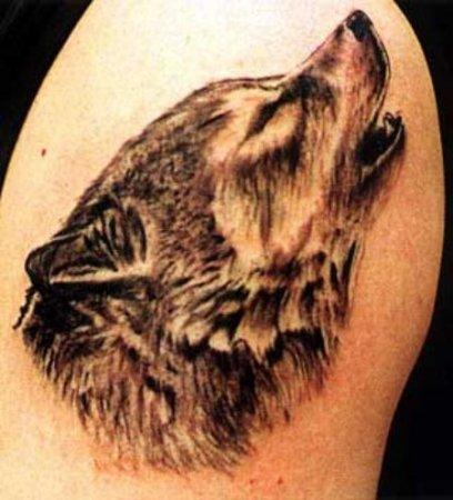 Фото волк с оскалом