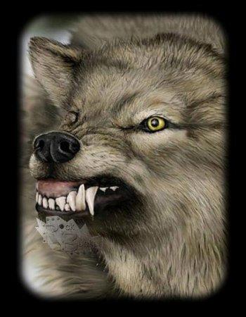 Оскал волка тату
